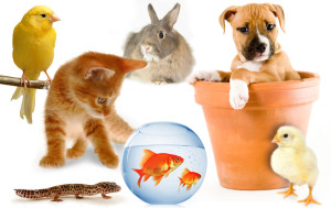 Free stuff sand samples of pet products